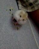 Tp. Hồ Chí Minh: Thanh lý bộ thú cưng hamster CL1203541P5