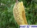 Tp. Hà Nội: Mật ong rừng nguyên chất (Lh: 0165 327 9999 CL1102659