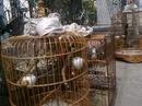 Tp. Hồ Chí Minh: Tphcm, bán chào mào bình dịnh 2 mùa CL1409010P4