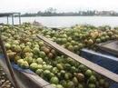 Tp. Hồ Chí Minh: Bán sỉ và lẻ dừa ( dừa xiêm, dừa khô) CL1023973