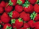 Tp. Hà Nội: Các mẹ ơi: Bán táo xanh Ninh Thuận, dưa hấu không hạt, Thanh Long ruột đỏ .. trái CL1110528