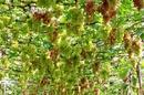 Tp. Hồ Chí Minh: Tour 30/ 4 &1/ 5/ 2012 Phan Rang - Tháp Chàm CL1109580