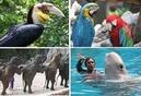 """Tp. Hồ Chí Minh: Cty DV-DL Happy Land Travel giới thiệu chương trình du lịch hè""""Du ngoạn 4 đảo"""" CAT246_255_305"""