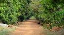 Đồng Nai: Đất vườn Định Quán 2 mặt tiền gần khu du lịch giá 1. 1 tỉ. CL1109897