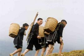 Bán cục HUYẾT LÌNH 1 kg do dân tộc Dao săn trong rừng sâu dãy núi HLS, Sapa !