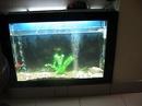 Tp. Hà Nội: Tôi cần bán 1 bể cá thuỷ sinh d 115x20x80 cm kinh 8 ly CL1218505