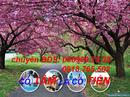 Tp. Hồ Chí Minh: bán đất bình chánh gần chợ bến thành q1 giá 500tr/ nền xây tự do CL1163563