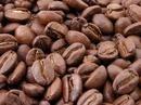 Tp. Hồ Chí Minh: Cung cấp cà phê hạt rang pha máy CL1110609