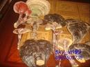 Quảng Nam: Bán nấm linh chi(nấm lim xanh) Quảng nam chữa bệnh. CL1132737
