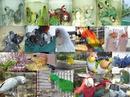 Tp. Hà Nội: Vẹt và trứng con vẹt để bán CL1409010P4