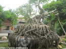 Tp. Hồ Chí Minh: Diendansinhvatcanh. com- Công cụ làm giàu không thể thiếu của dân Sinh vật cảnh, CL1139502