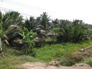 Bến Tre: Sang nhượn 14000 m2 đất vườn dừa mặt tiền tỉnh lộ 887 Huyện Giồng Trôm - Bến Tre CL1168149