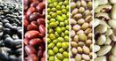 Đồng Nai: Cần tìm nhà phân phối loại nông sản sấy khô, tinh bột đậu, tinh bột khoai. .. CL1172228P10