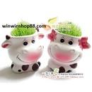 Tp. Hồ Chí Minh: winwinshop---Bộ sưu tập cỏ tóc CL1159713P2