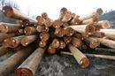 Tp. Hồ Chí Minh: Bán gỗ thông tròn số lượng lớn CL1164126P6