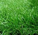Tp. Hồ Chí Minh: Ở đâu thi công sân cỏ nhân tạo giá rẻ CL1218342