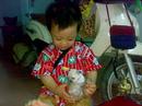 Tp. Hồ Chí Minh: hcm-bán chihuahua mini thuần chủng 2 tháng siêu nhỏ bỏ ly gốc Mexico giá rẻ CL1186551