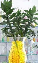 Tp. Hồ Chí Minh: Đất màu sinh học-thích hợp cây cảnh trong nhà và cơ quan, môi trường sạch, đẹp CL1203709P10