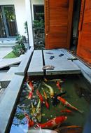 Tp. Hồ Chí Minh: Bán biệt thự vườn Nhà Bè gần phú mỹ hưng quận 7 giá chỉ 1,3 tỷ/ căn CL1209152P3