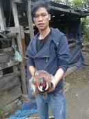 Tp. Hồ Chí Minh: Bán chim trĩ đỏ, rùa núi vàng CL1217700