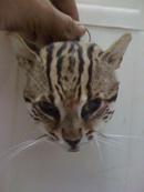 Gia Lai: móc khóa da thú và thú nhồi bông CL1218094
