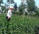 Tp. Hồ Chí Minh: Trà O LONG-tuyệt ngon, thưởng thức hay làm quà CL1213033
