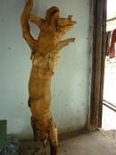 Tp. Hồ Chí Minh: Rễ cây Mật nhân, . giúp tằng cường sinh lực cho đàn ông-rẻ CL1213558