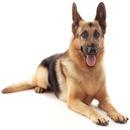 Tp. Hà Nội: Nhận huấn luyện cún yêu CL1218302