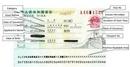 Tp. Hà Nội: Làm hộ chiếu lấy nhanh trong 1 ngày CL1156749