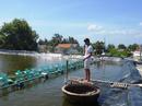 Khánh Hòa: sang nhượng đìa nuôi tôm tại Tu Bông vạn ninh khánh hòa CL1421964P11