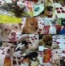 Tp. Hồ Chí Minh: Nhận trông giữ chó mèo dịp Tết 2014. CL1183465P8