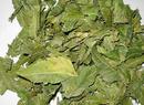 Tp. Hồ Chí Minh: Lá NEEM của Ấn Độ-sản phẩm Chữa tiểu đường tốt CL1301093