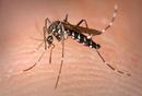 Tp. Hồ Chí Minh: Diệt côn trùng CL1701058