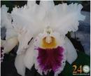 Tp. Hồ Chí Minh: Cattleya hoa lan 0903815572 CL1315987