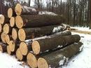 Bình Dương: Cung cấp gỗ Tần bì tròn số lượng lớn giá rẻ CL1217931