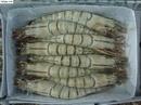 Tp. Hà Nội: Bán buôn tôm sú tươi sống, tôm sú đông lạnh giao hàng miễn phí ở Hà Nội CL1217931
