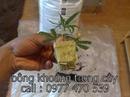 Tp. Hồ Chí Minh: cần mua tấm sợi khoáng trồng cây CL1697828