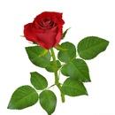 Tp. Hà Nội: Tìm nhà phân phối hoặc bán kèm hoa giả, hoa lụa nghệ thuật trang trí CL1322421