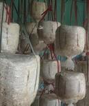 Tp. Hà Nội: Bán bịch nấm trồng tại nhà, năng suất cao, dễ chăm sóc CL1179413P11