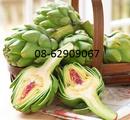 Tp. Hồ Chí Minh: Ván sản phẩm Atiso Đà Lạt- Làm mát gan, giải độc, thanh nhiệt, giảm cholesterol RSCL1680890