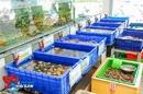 Tp. Hà Nội: Nhà hàng siêu thị thế giới hải sản - nhiều loại hải sản tươi sống nhất Hà Nội CL1187022