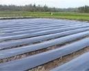 Tp. Hồ Chí Minh: Chuyên cung cấp màng nhà kính và màn phủ nông nghiệp RSCL1017202