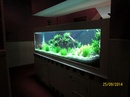 Tp. Hồ Chí Minh: Hồ cá nghệ thuật chuyên lắp đặt và thi công hồ cá thủy sinh theo yêu cầu của khá CL1456713