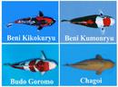 Tp. Hồ Chí Minh: Chuyên cải tạo hệ thống lọc cho hồ cá koi CL1218505