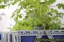 Tp. Hồ Chí Minh: Hệ Thống Trồng Rau Sạch Tự Động Tại Nhà Enjoy Aquaponics RSCL1692442