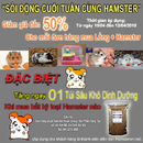 Tp. Hà Nội: Khuyến mãi giảm giá chuột Hamster tại Sản Phẩm Sáng Tạo 244 Kim Mã Hà Nội RSCL1169981