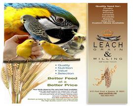 Leach Grain thức ăn gà đá gà chọi gà cảnh gà giống & các giống Gà cao cấp