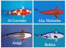 Tp. Hồ Chí Minh: Chuyên thiết kế thi công hồ cá koi CL1088731P11