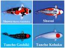 Tp. Hồ Chí Minh: Vì sao cá chép Koi được xem là cá cảnh thân thiện nhất? CL1217913