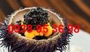 Tp. Hồ Chí Minh: Mua nhum biển tươi ngon giá rẻ tại tphcm, giá nhum biển tươi sống, bán cầu gai RSCL1193104